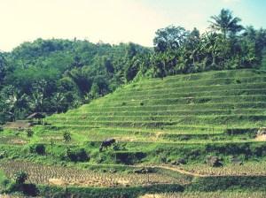 Dataran Tinggi Cianjur, Jawa Barat